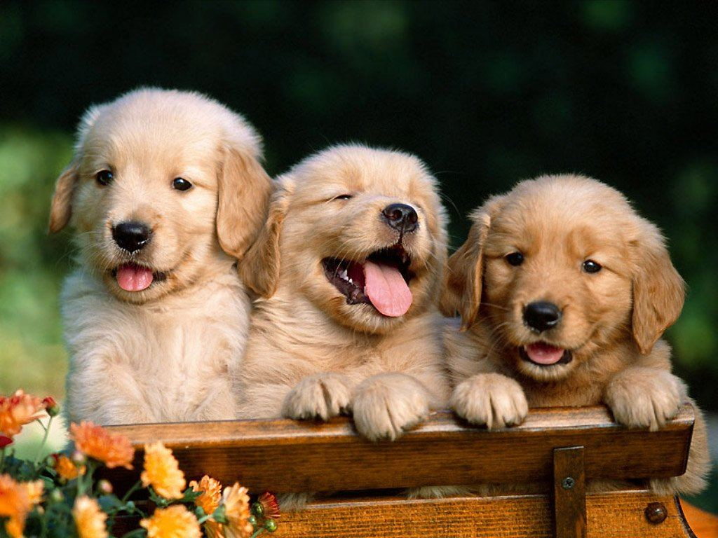 สุนัขสามตัว