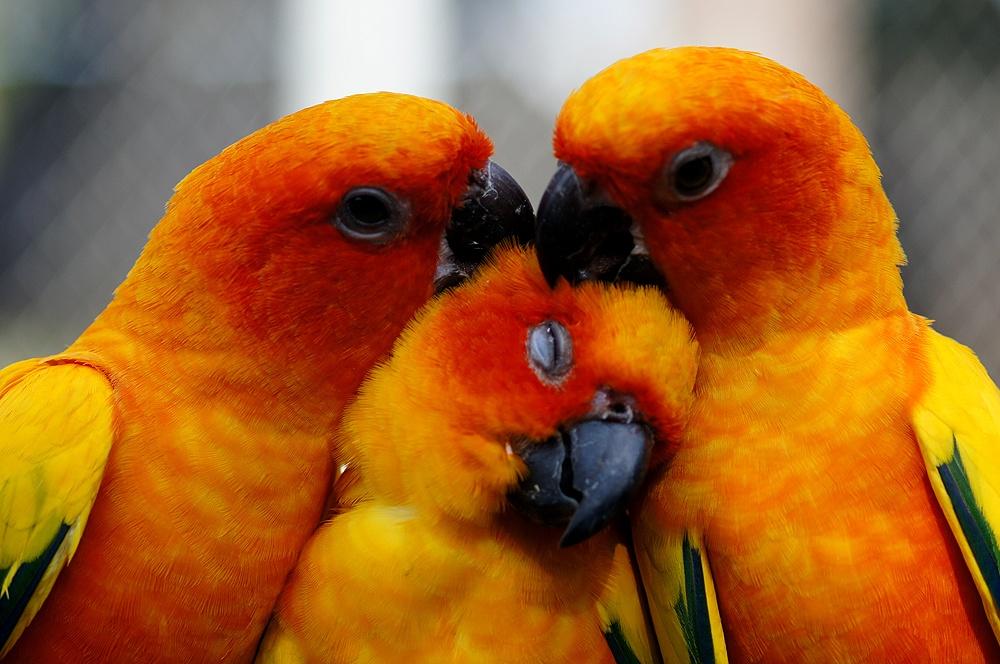 นกครอบครัว