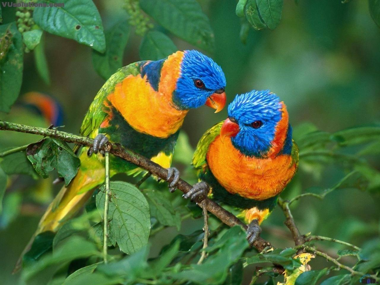 นกคู่